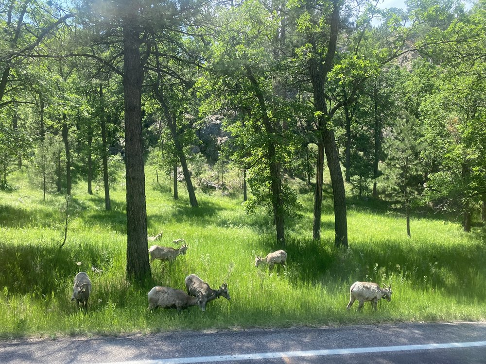 Dakota Tours: 11750 Sturgis Rd, Summerset, SD