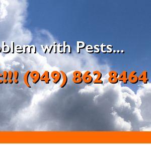 Bird B Gone - Pest Control - 15375 Barranca Pkwy, Irvine, CA