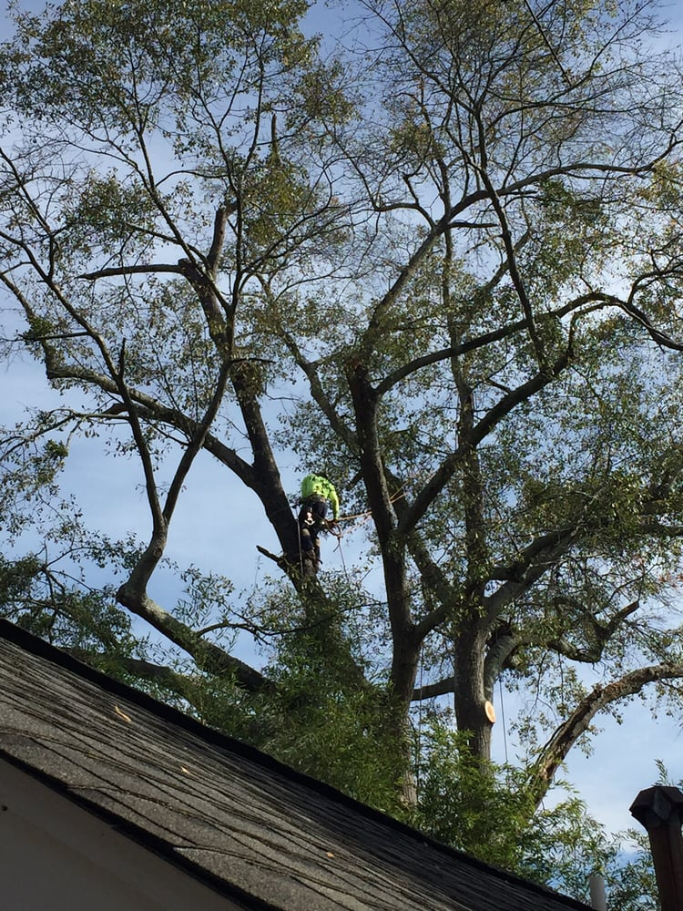 Aka Tree Removal 48 Photos 25 Reviews Services 2333 Peachtree Blvd Buford Ga Phone Number Last Updated December 12