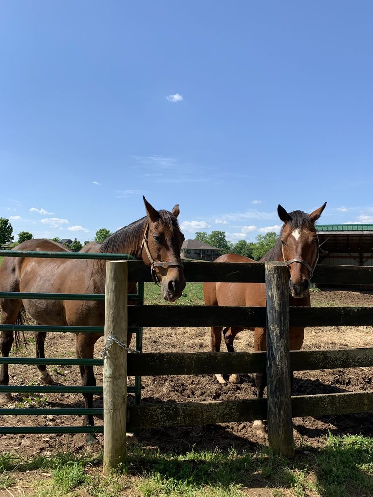 Old Friends: 1841 Paynes Depot Rd, Georgetown, KY