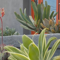 Photo Of Xeristyle Exterior Design   Fullerton, CA, United States.