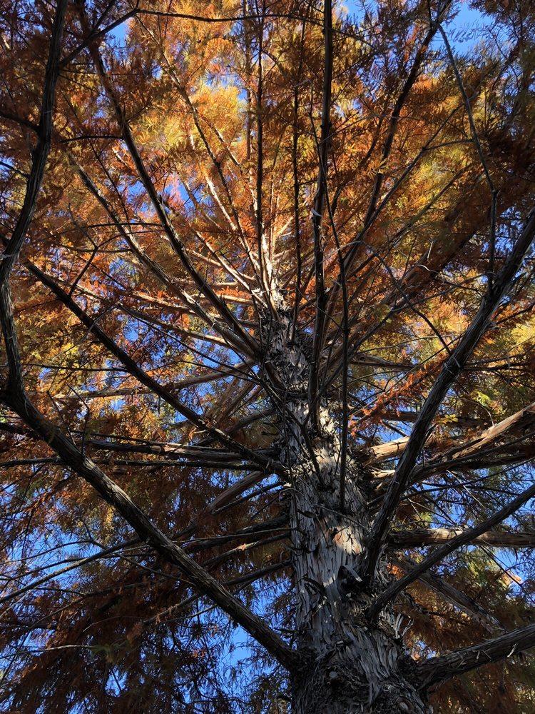 Trees That Please: 3084 Highway 47, Los Lunas, NM