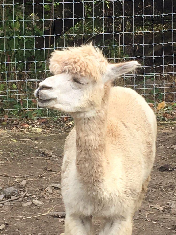 Lucky Penny Alpacas: 320 Wawa Rd, Media, PA