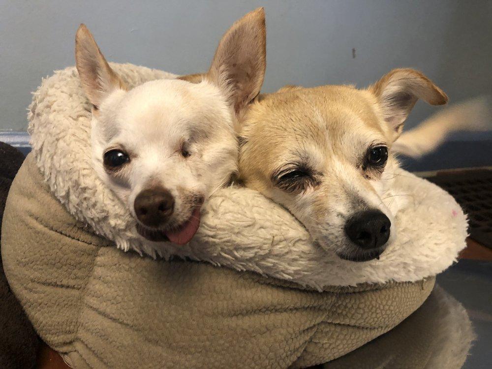 Comfy Dog Club
