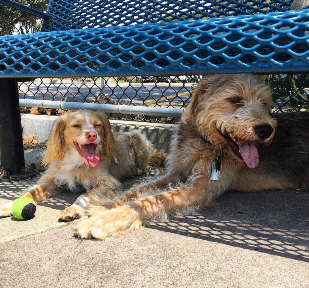 Pet Quirk: Herndon, VA