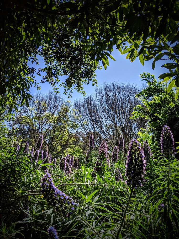 Secret Garden: 7111 Talbert Ave, Huntington Beach, CA