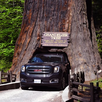 Drive thru tree 233 photos 120 reviews parks 67402 drive photo of drive thru tree leggett ca united states a large mozeypictures Image collections