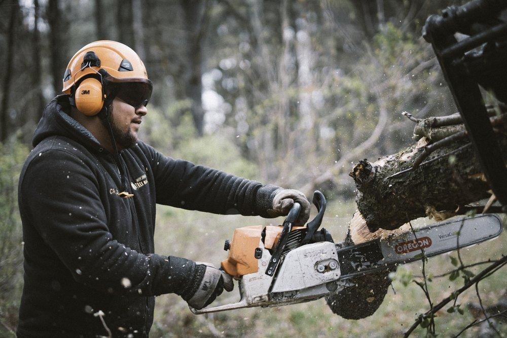 New England Tree Masters