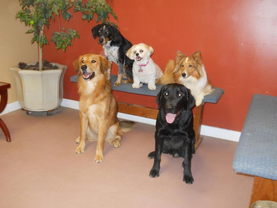 Heartstrings Pet Lodging: 809 Patrick Henry Dr, Blacksburg, VA