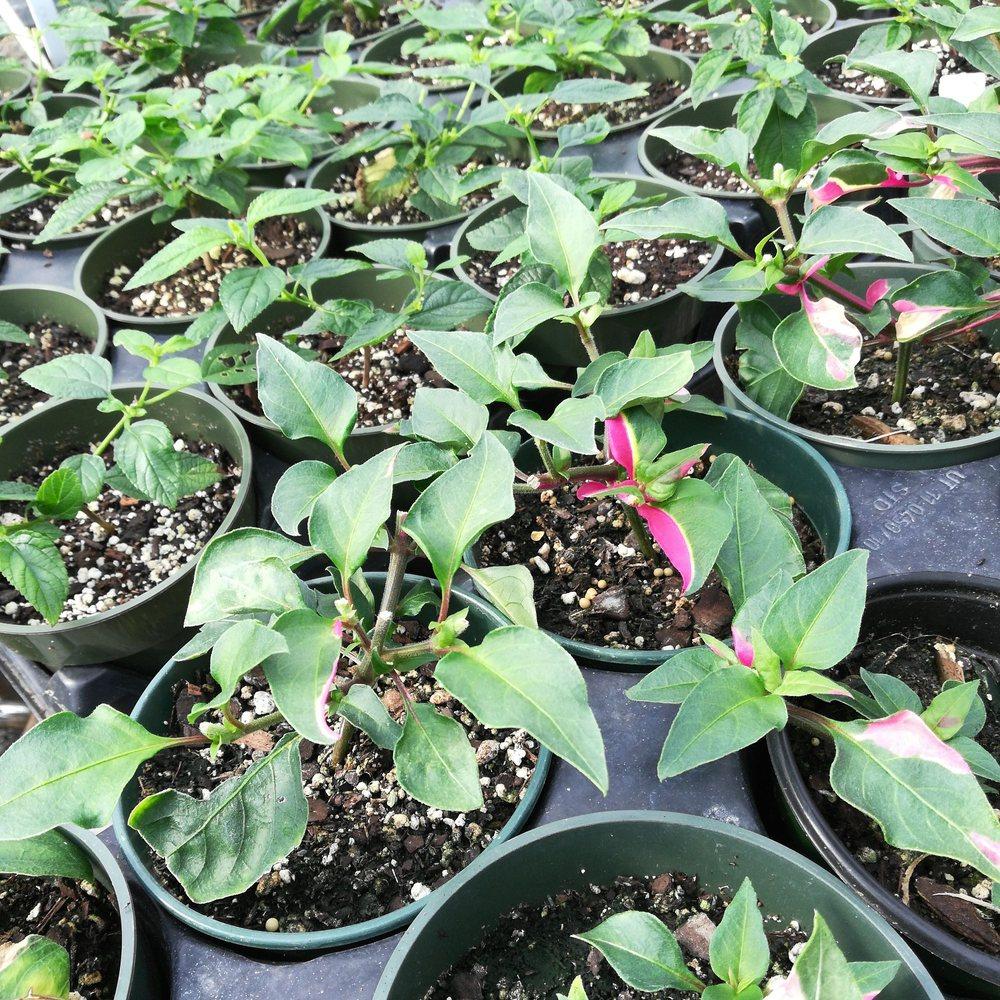 Botanical Garden Of The Ozarks 27 Photos Recreation Centers 4703 N Crossover Rd
