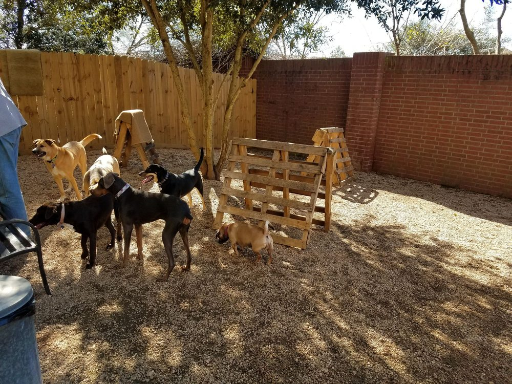 Texas Doggie Daycare: 1100 Fm 1092 Murphy Rd, Missouri City, TX
