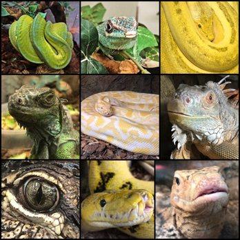 The Reptile Zoo - (New) 597 Photos & 257 Reviews - Zoos