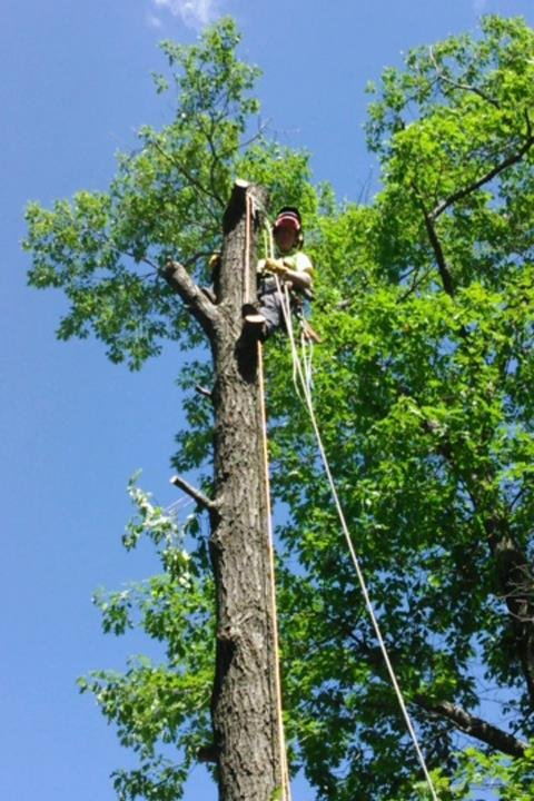Axe Tree Service/ Axe Sustainable Woodcraft: W8495 Oakridge Rd, Conrath, WI