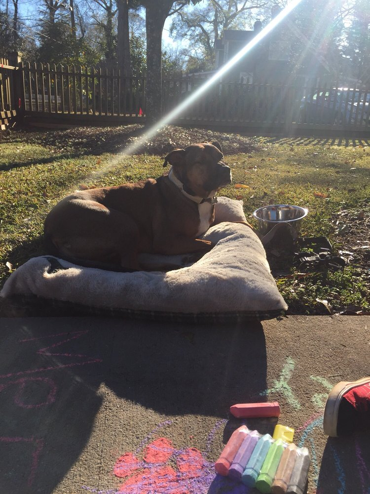 Atlanta Dog Wizard: Atlanta, GA