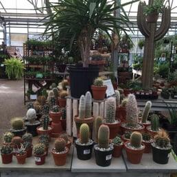 Cactusss yelp - Merrifield garden center fairfax va ...