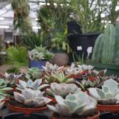 Photo Of Atlantic Gardening Company   Raleigh, NC, United States. So Many  Succulents