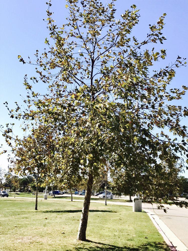 Ventura Community Park: 901 S Kimball Rd, Ventura, CA