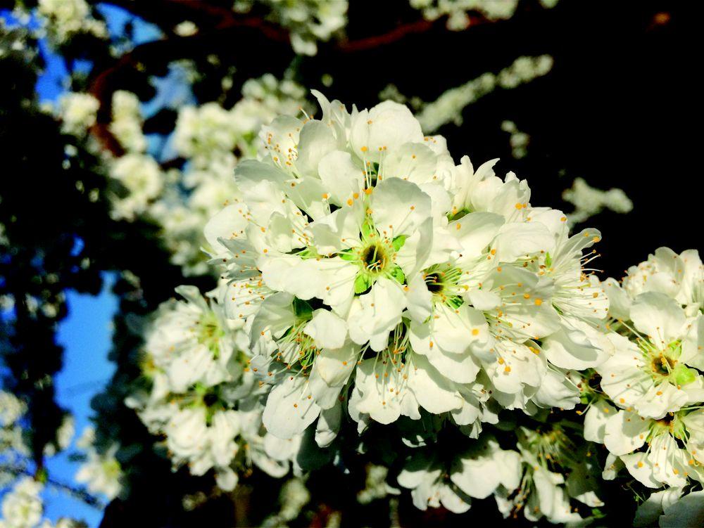 Drumheller's Orchard: 1130 Drumheller Orchard Ln, Lovingston, VA