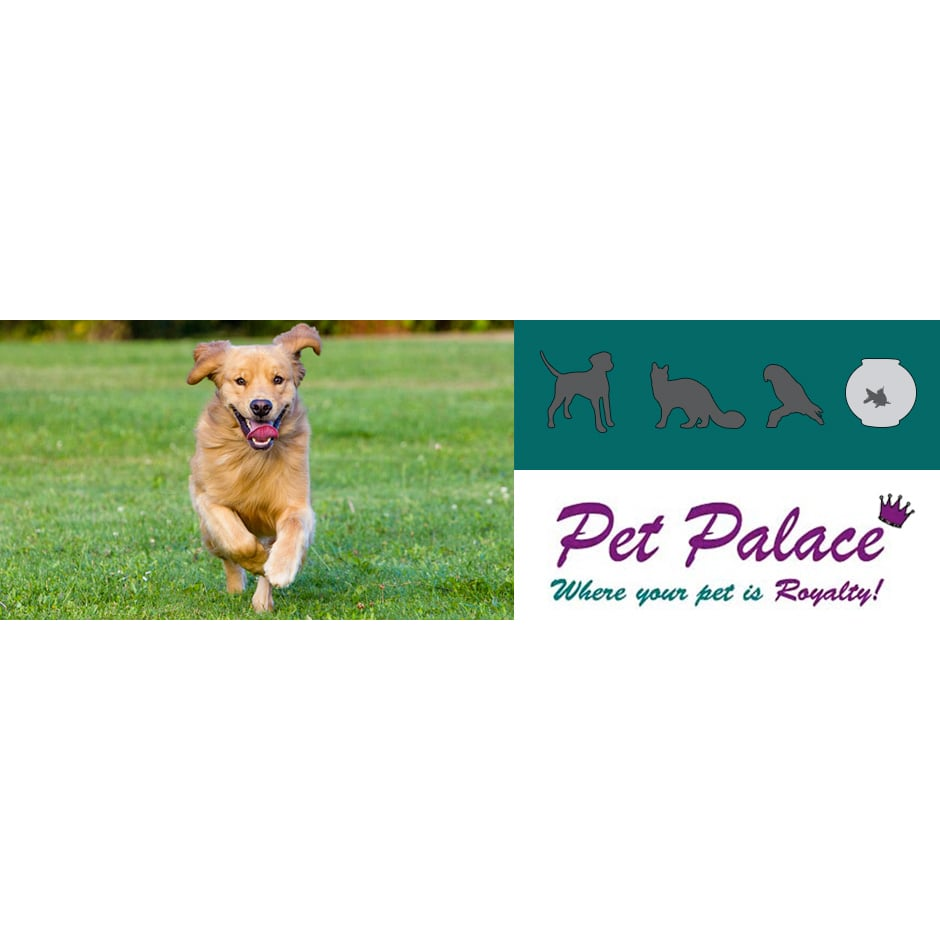 find an emergency vet near you petflight pets world