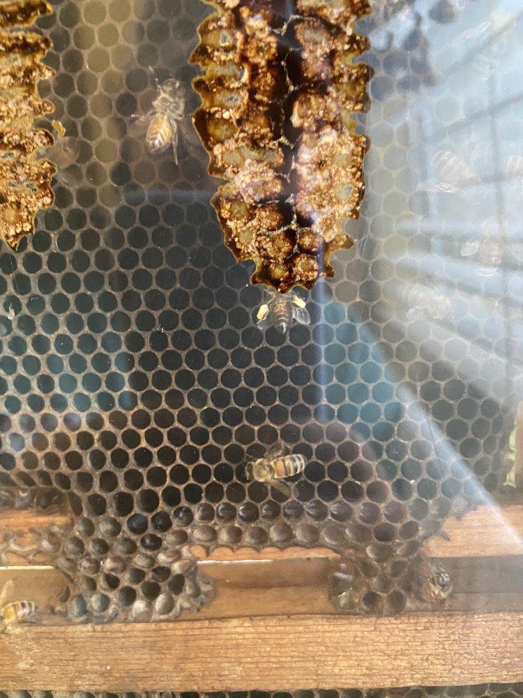 Webb's Honey: 21777 State Rd 520, Orlando, FL
