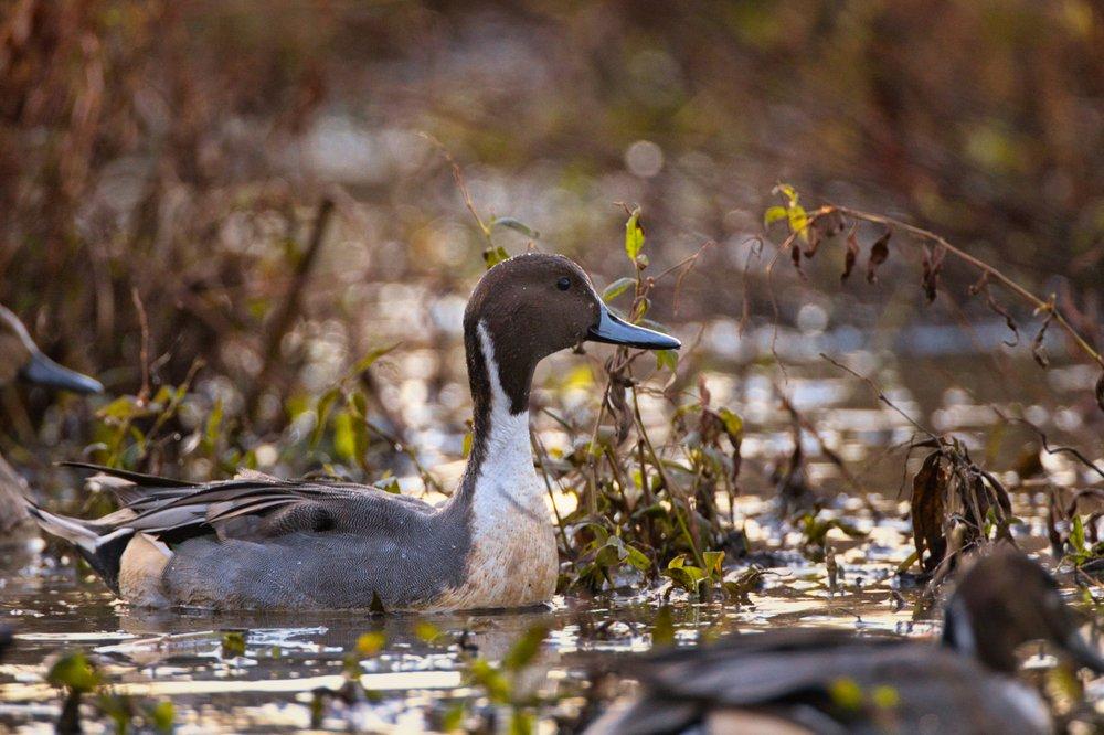 Huntley Meadows Park: 3701 Lockheed Blvd, Alexandria, VA