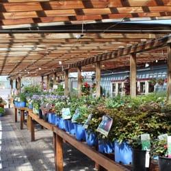 evergreen landscaping garden center nurseries gardening 6278