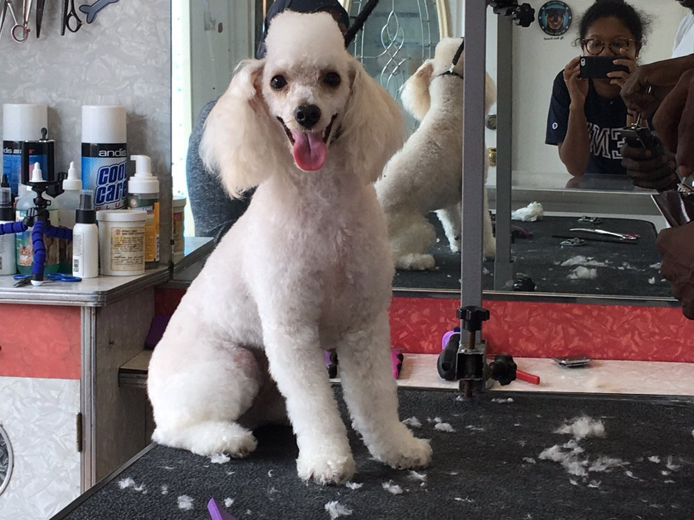 Topdawg Groomers