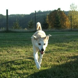 Roxy S Dog Ranch Ridgefield