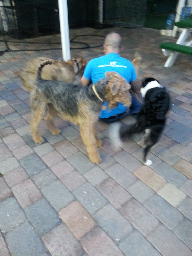 Wilton s manor doggie daycare resort spa 35 photos for Dog boarding places near me