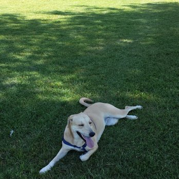 Bakersfield Small Dog Park