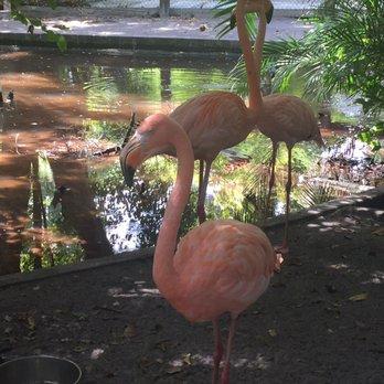 Photo Of Everglades Wonder Gardens Bonita Springs Fl United States Beautiful Flamingoes
