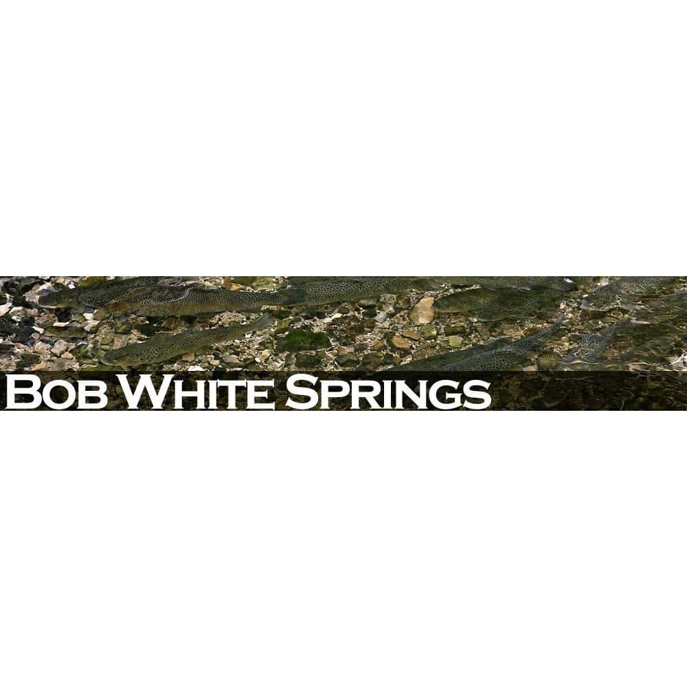 Bob White Springs: 3500 Johnson Rd W, Only, TN
