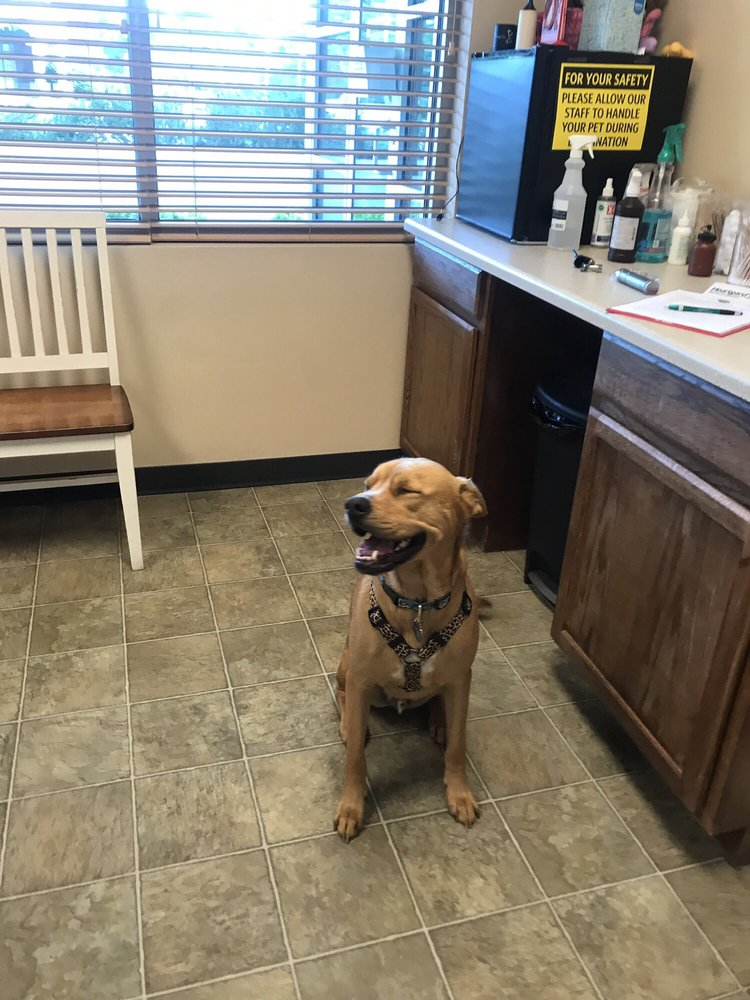 Woodington Veterinary: 742 E State St, Eagle, ID