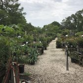 Photo Of Maas Nursery Seabrook Tx United States Rows And