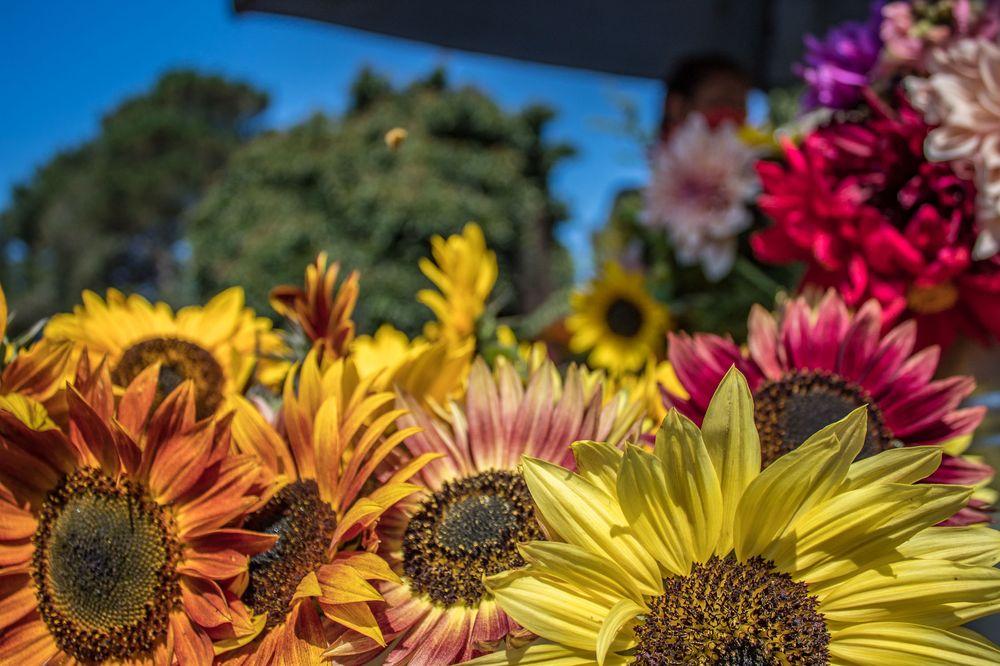 Fortunate Farm: 15401 N Hwy 1, Caspar, CA