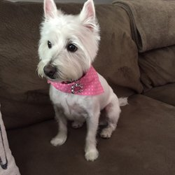 Dog Country Grooming Arvada