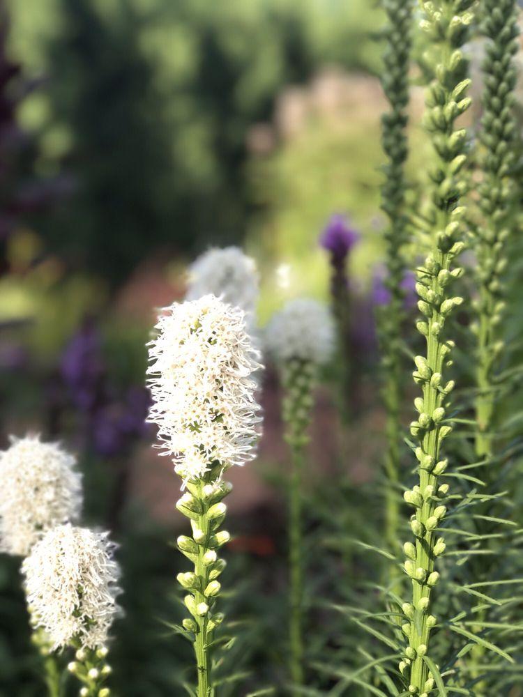 Munsinger Gardens: 1515 Riverside Dr SE, Saint Cloud, MN