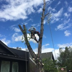 Photo Of Arbor 1 Tree Service Bend Or United States