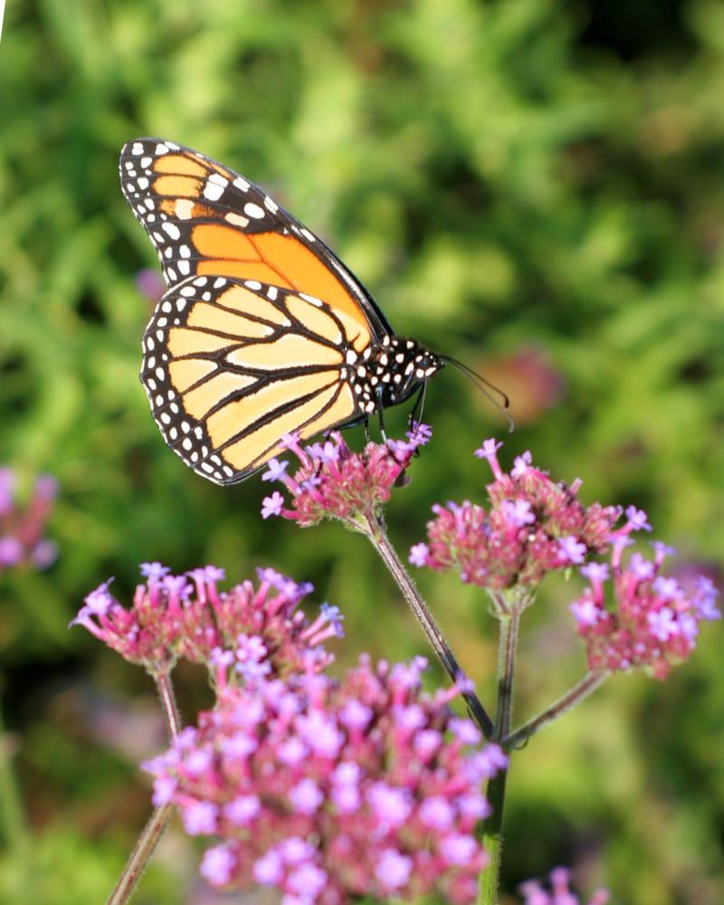 Pleasant View Gardens Inc: 5835 Drake Dr, Maple Plain, MN
