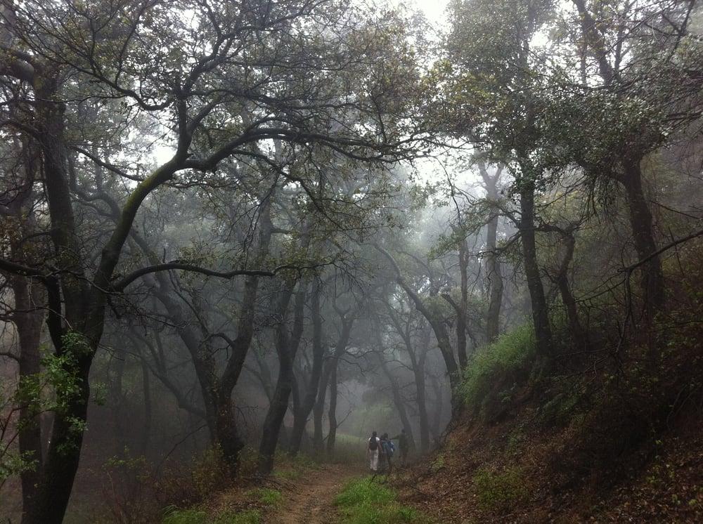 Photos For Placerita Canyon Nature Center Yelp