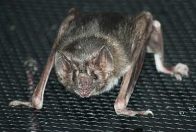 Carolina Wildlife Removal: 2316 Sapphire Valley Dr, Raleigh, NC