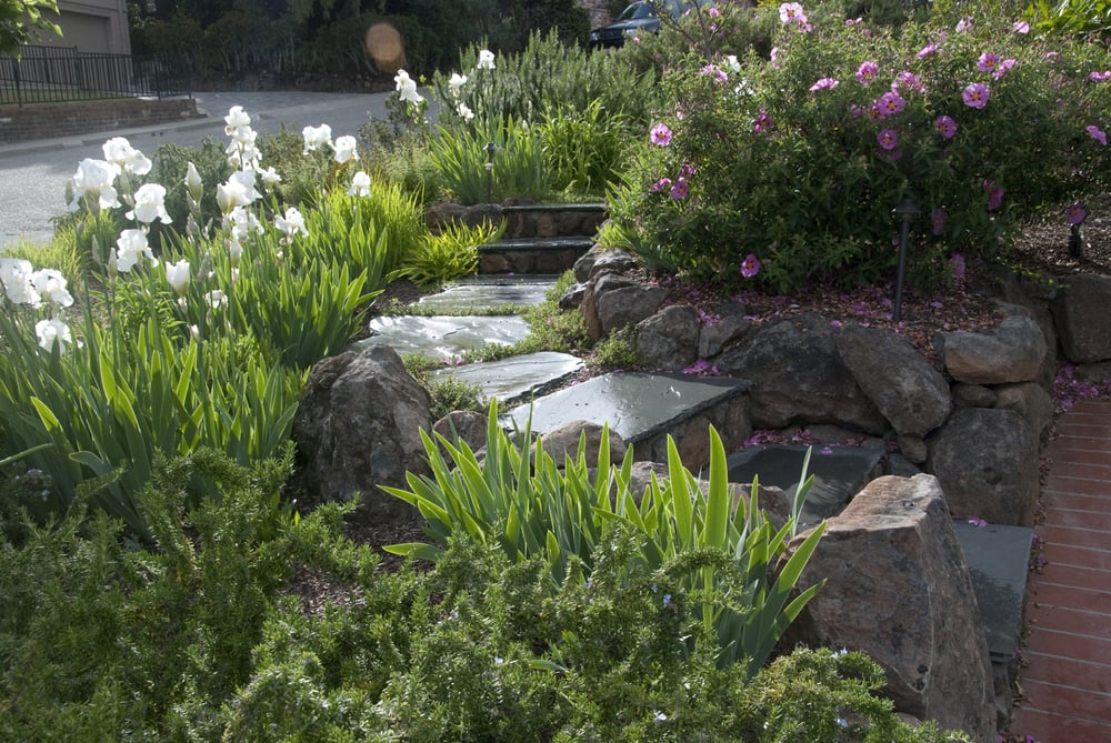Bluestone and boulder steps with white bearded iris for Verdance landscape design