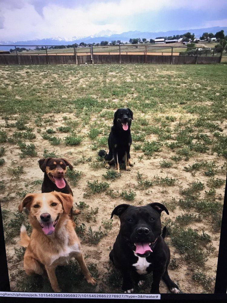 Happy Tails Dog Ranch: 18490 County Rd 1, Berthoud, CO