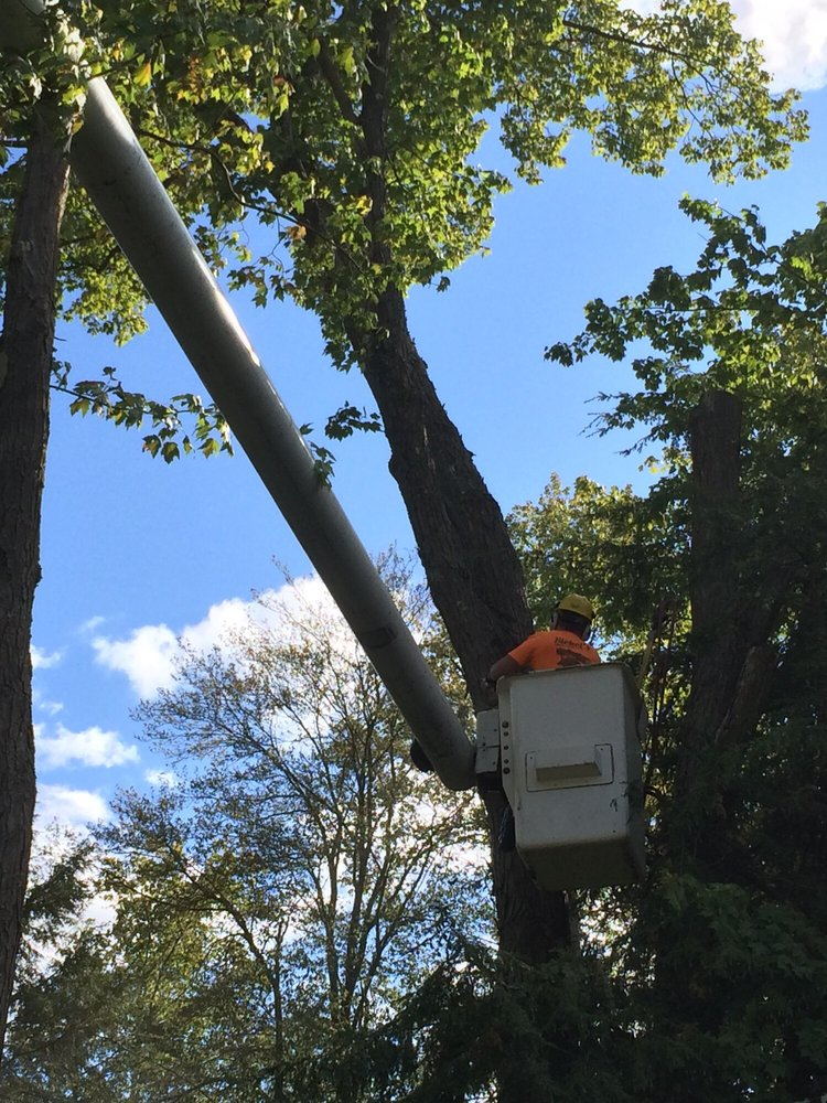 Bickel's Tree Service: 865 Underwood Dr, Fisher, PA