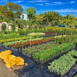 Photo Of Mar Pines Nursery Hollywood Fl United States