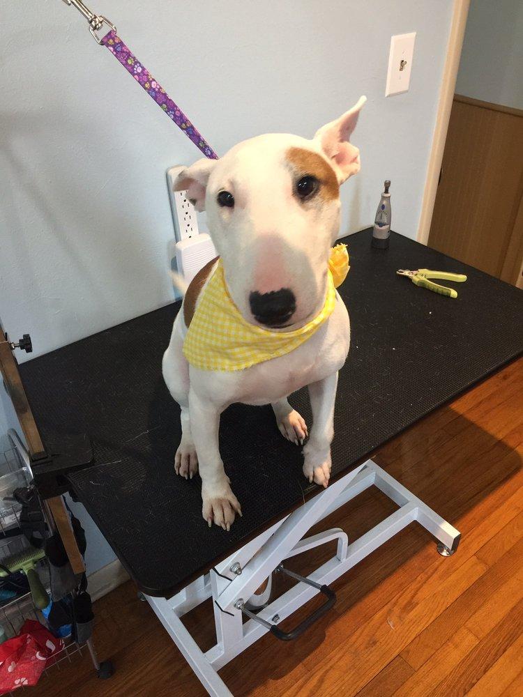 The Dog Spaw: 701 Hwy 5 N, Mountain Home, AR
