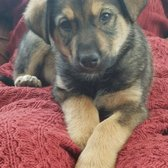 Lifeline Puppy Rescue 20 Photos 33 Reviews Animal Shelters