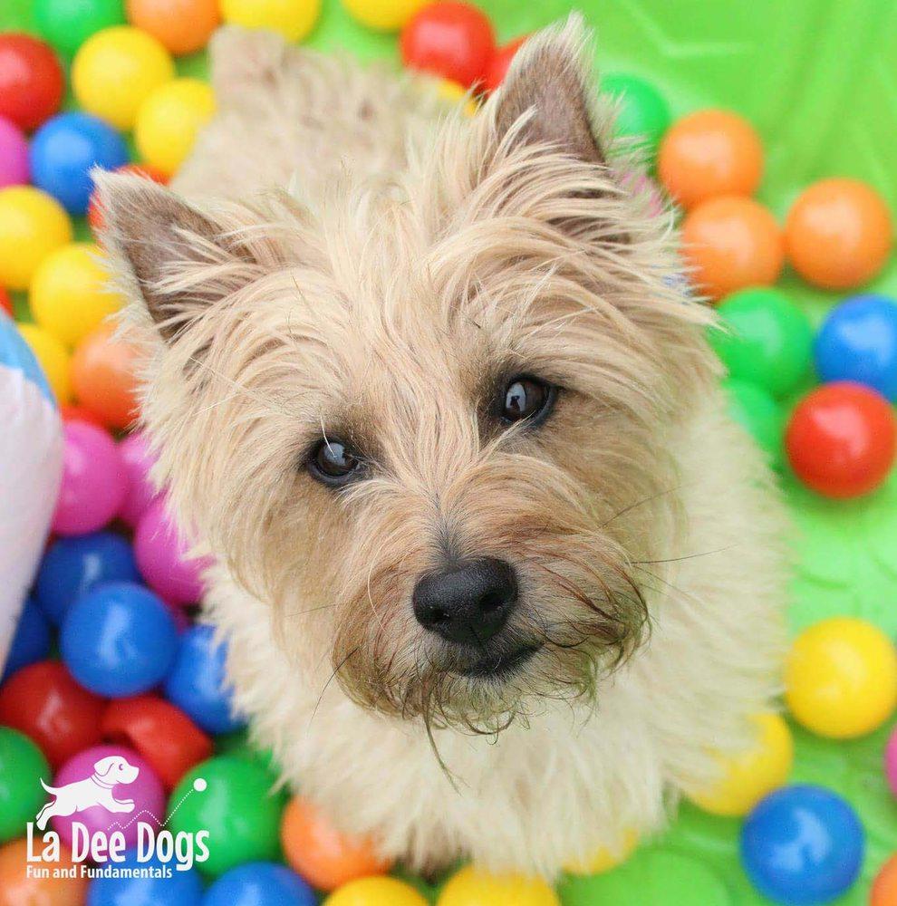 La Dee Dogs: 1124 Kuhn Dr, St Cloud, MN