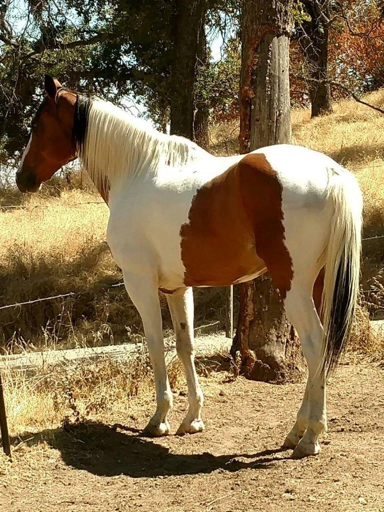 Saddle 'Em Up: 4005 Memory Ln, Mariposa, CA