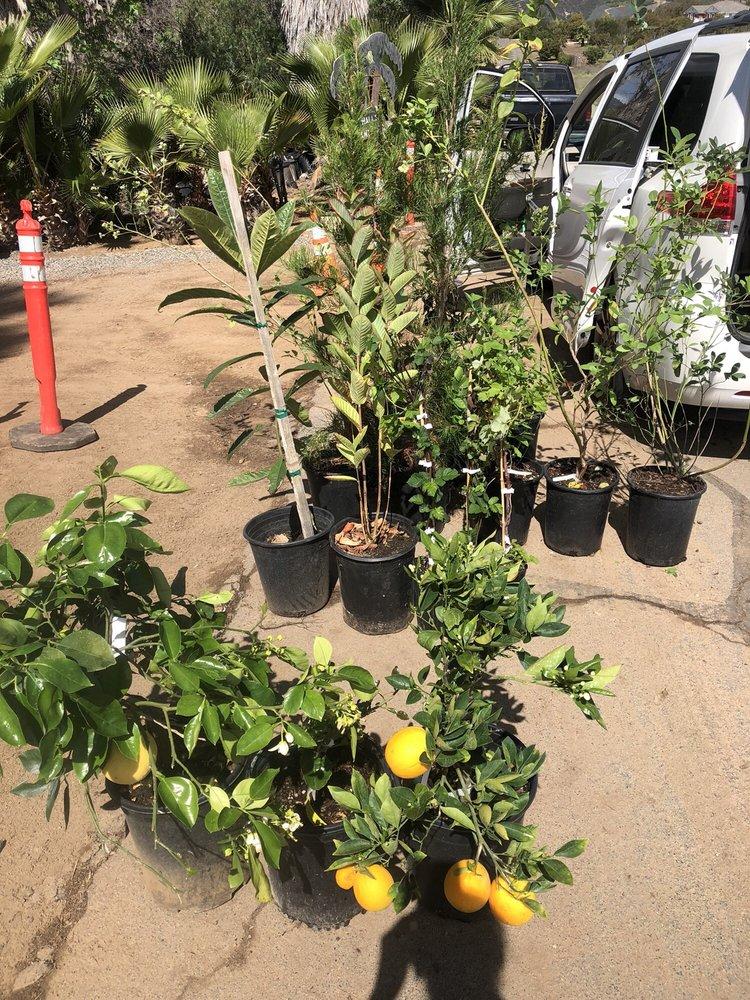 Photo Of Halls Plant Nursery Temecula Ca United States A Few